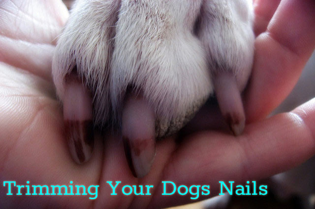 Best Way to Cut Dog\'s Nails - Scotts Dale Dog Grooming